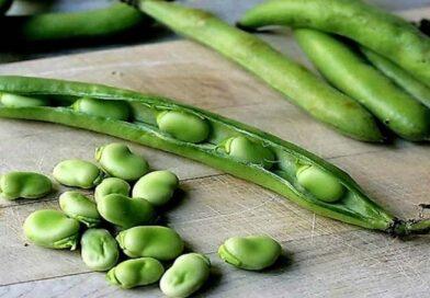 10 benefici per la salute delle fave